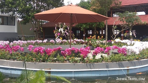 The Forest Island Purwokerto