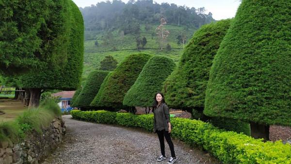 Bukit Jamur Bandung