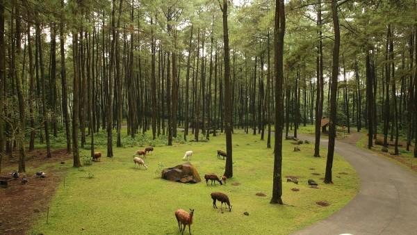 Taman Safari Terbaik Indonesia