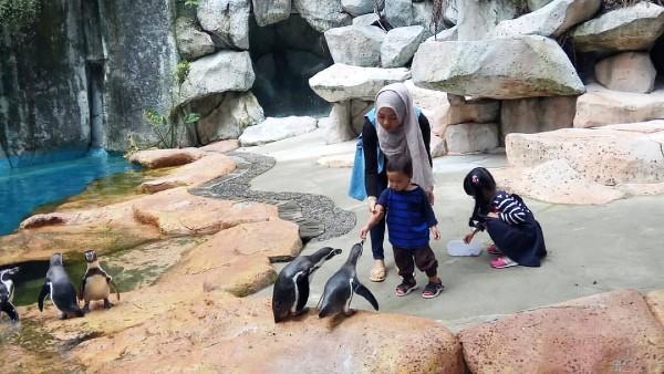 Taman Safari Terbaik di Indonesia
