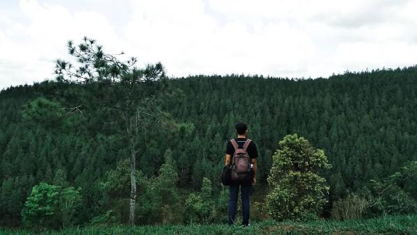 wisata pinus sewu