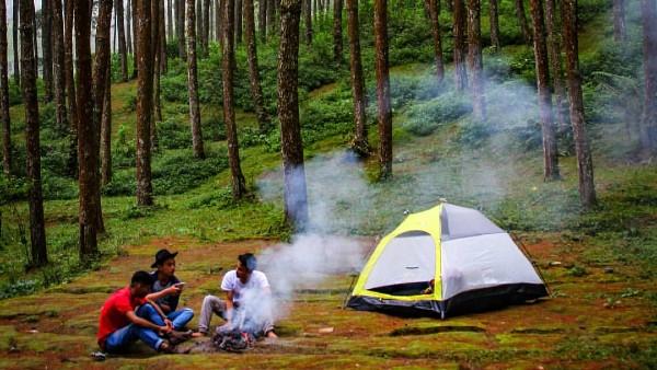 Hutan Pinus Mangli Magelang