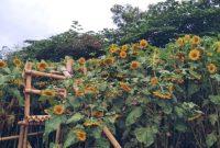 Kebun Bunga Barades