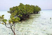 Harga Tiket Wisata Pulau Pari
