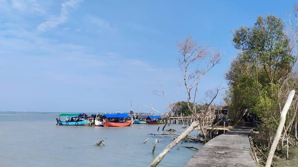 Hutan Mangrove Morosari Demak