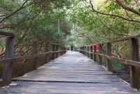 Hutan Mangrove Tapak