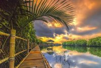 Tempat Wisata Mangrove Purworejo