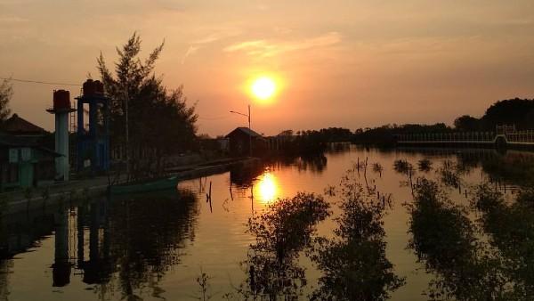 Harga Tiket Masuk Hutan Mangrove Pekalongan