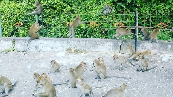 tempat ziarah di Cirebon yang banyak monyet